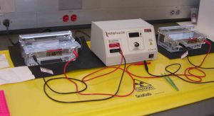 electrophoresis cr vs