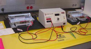 electrophoresis cr vs