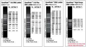 GeneRuler_DNA_Ladder_1